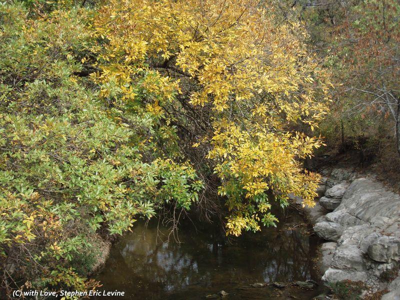 Fall-Tree over Creek-inet